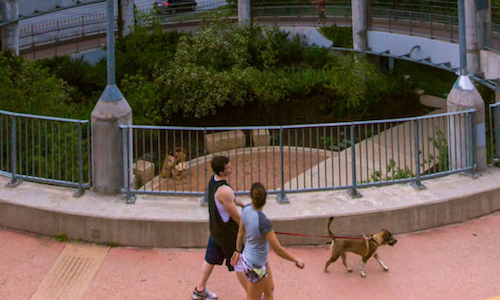 lifestyle image of a couple jogging with a pet